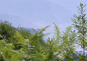 valle-delle-ferriere-trekking-nonno-tobia